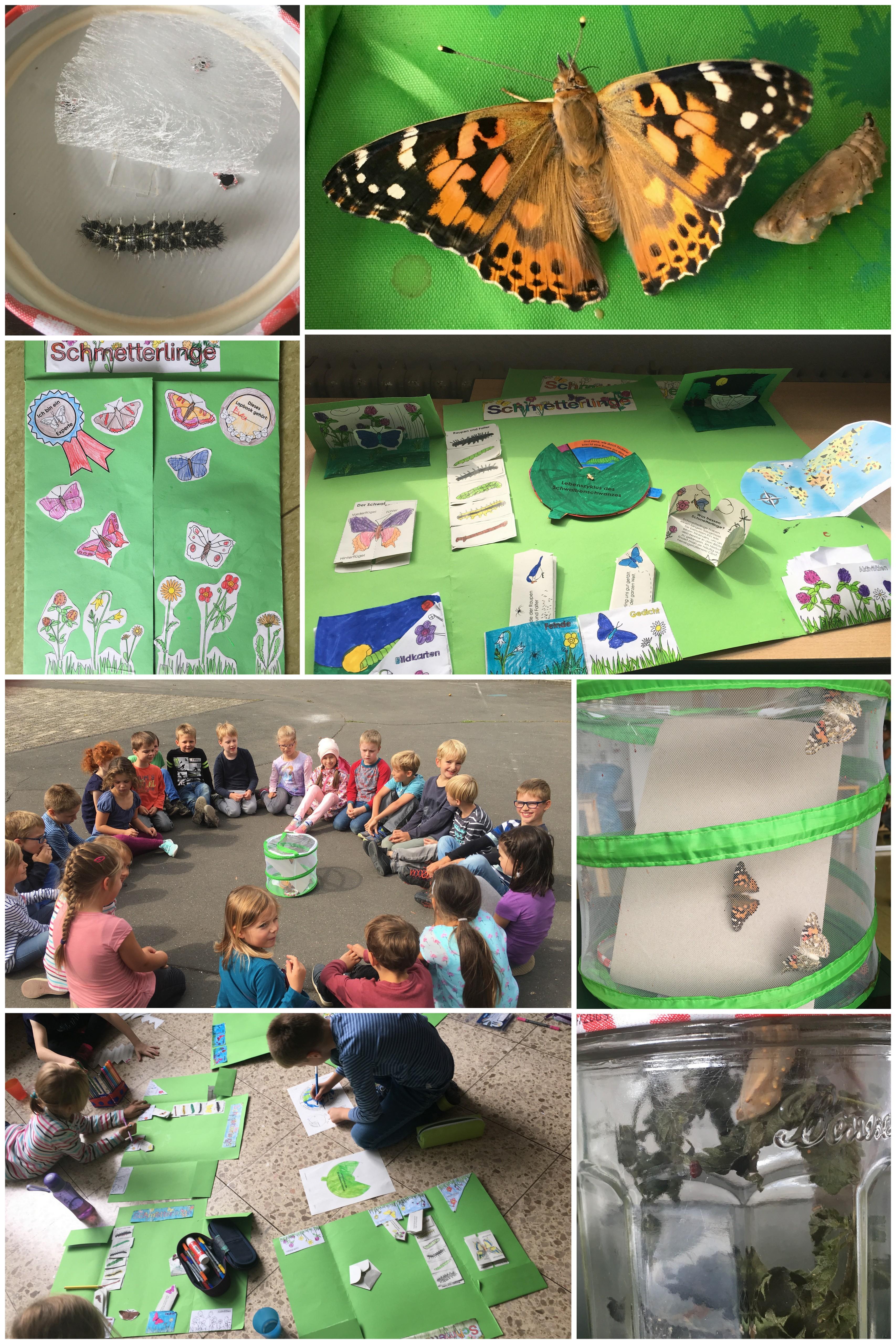 Grundschule Hillesheim Blog Archive Schmetterlinge In