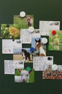Einige der super tierischen und netten Postkarten der 2c :)